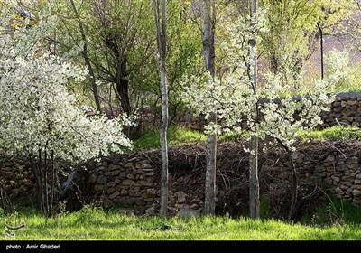 کوچه باغ های خوانسار