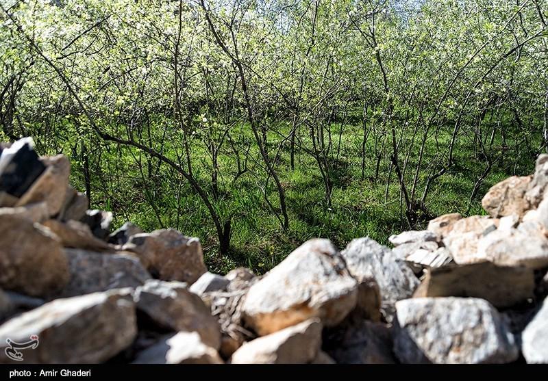 مشکلات باغستانهای سنتی قزوین مورد غفلت واقع شده است