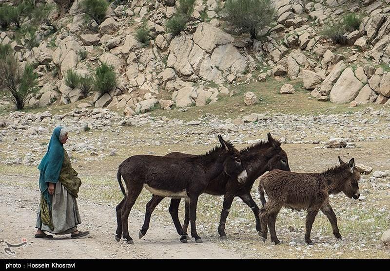 مشکلات آب و راه عشایر اردبیل برطرف میشود
