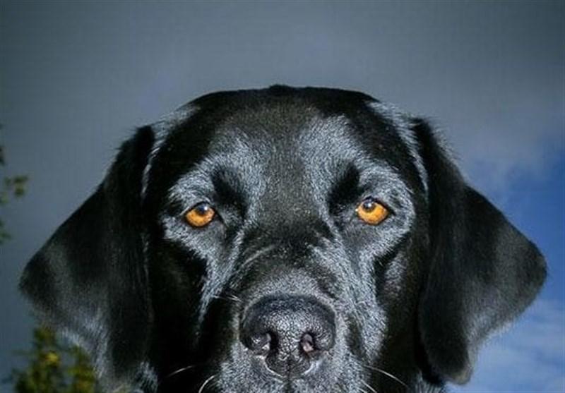 سگها پارکینسون را سالها قبل از ظهور تشخیص میدهند