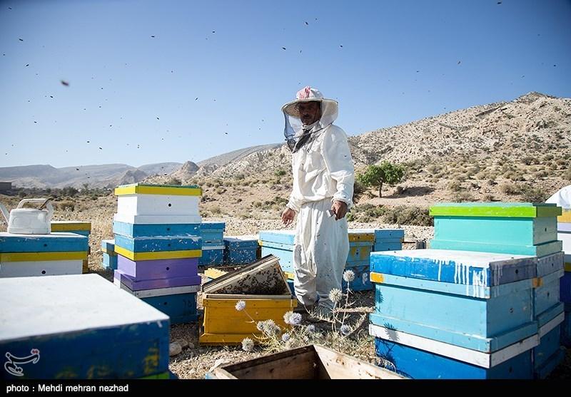 عضو در تلگرام جم بالیوود تولید عسل در جم - اخبار تسنیم - Tasnim
