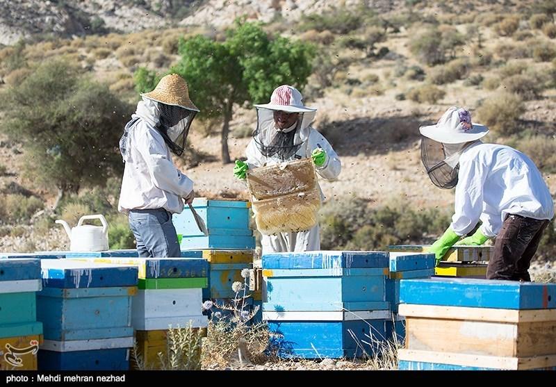 اصفهان| صادرات 7 تنی عسل شهرضا به کشورهای شرق آسیا