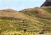 «معجزه آبخیزداری»|توسعه باغات دیم روی اراضی شیبدار؛ راهی کم هزینه برای مقابله با سیل و فرسایش خاک