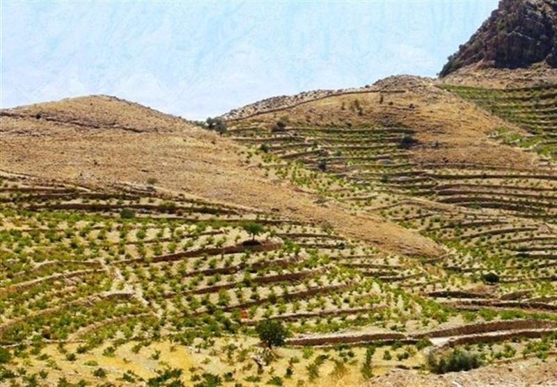 «معجزه آبخیزداری»| افزایش 10 برابری درآمد کشاورزان با احداث باغات دیم روی اراضی شیبدار