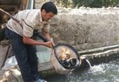 وقتی بسیج سازندگی برای جوانان روستایی اسکو اشتغالزایی میکند