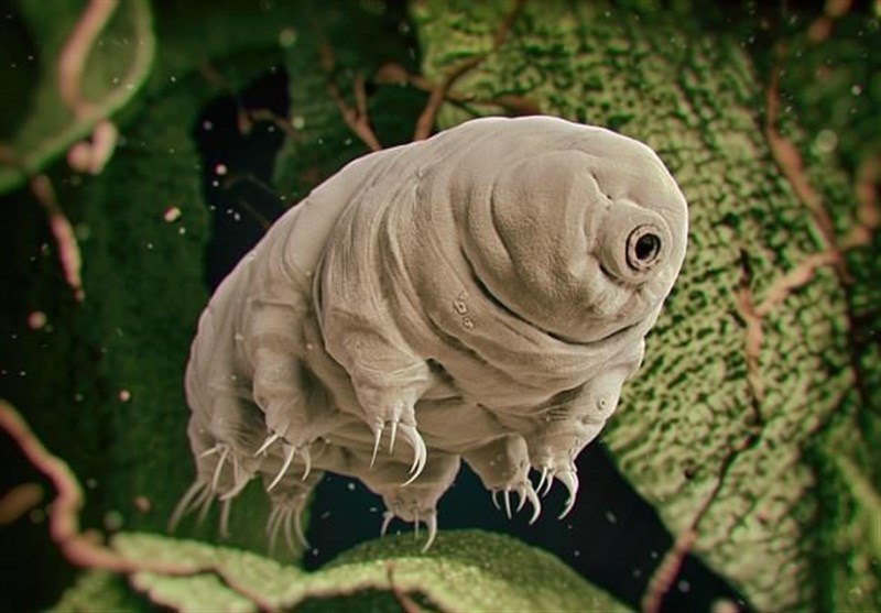 Tiny mini-monsters called tardigrades or 'water bears' will outlive humanity, conquer the Earth and survive until the sun