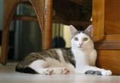 16 سال زندان برای قاتل 21 گربه + عکس