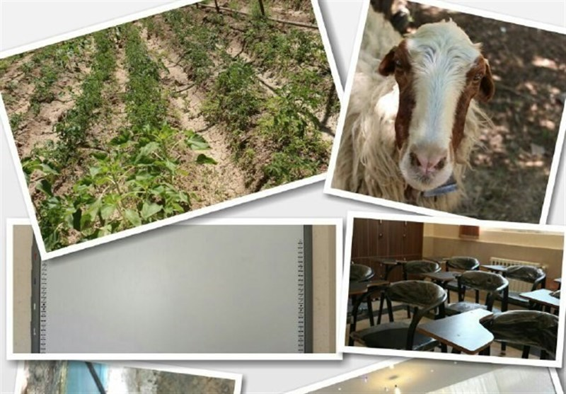 مدرسهای با مزرعه کشاورزی و جانوری