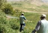 کرمان| حمله ملخها به منوجان و قلعه گنج کاملا تحت کنترل است