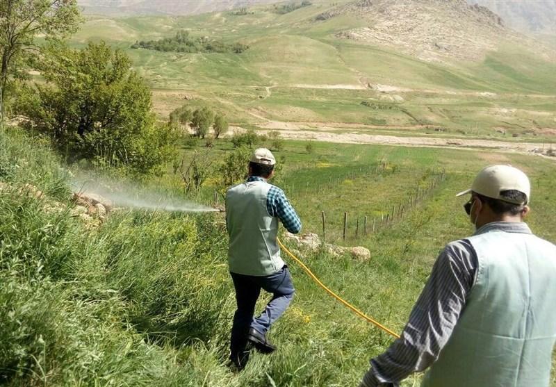 15 هزار هکتار زمین کشاورزی سیستان و بلوچستان علیه ملخ صحرایی سمپاشی شد
