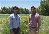 اشتغالزایی دو برادر فیروزآبادی برای 5 هزار نفر روز کارگر/ سرمایه یک کارآفرین پشتکار و امید به خدا است