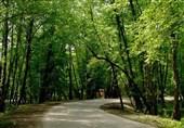 بهرهبرداری از جنگلهای شمال کشور امسال متوقف میشود