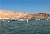 پروژههای پرورش ماهی در قفس استان بوشهر به ظرفیت 3000 تن آماده بهرهبرداری است
