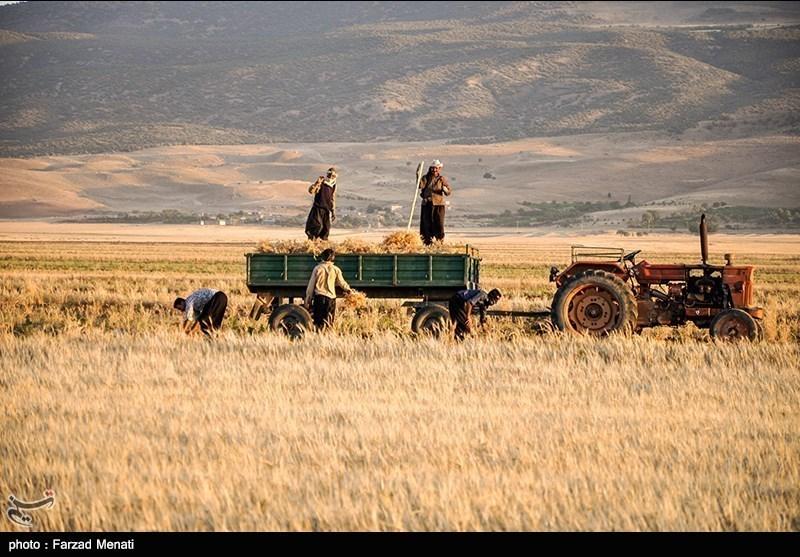 ایران کے صوبہ کرمانشاہ میں گندم کی کٹائی
