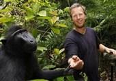 جنجال بر سر عجیب ترین سلفی دنیا / میمون خندان قوانین کپی رایت را به چالش کشید + عکس