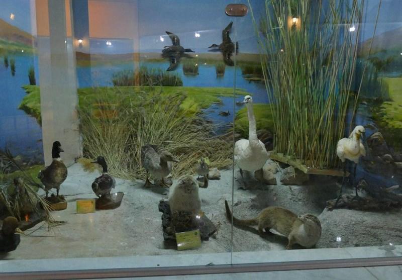 بازدید از موزه تاریخ طبیعی اردبیل برای کودکان رایگان است