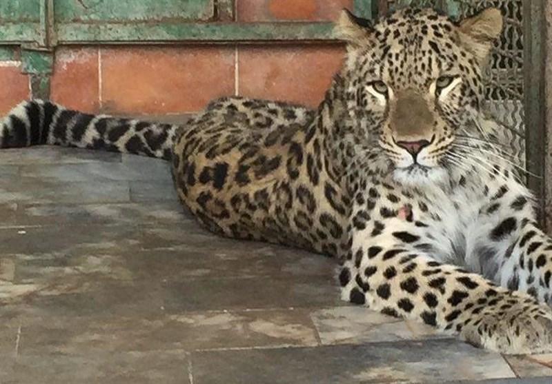 دادستانی مخالف تعطیلی باغوحش مشهد است