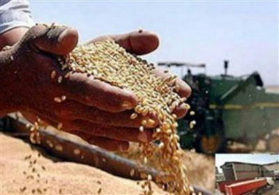 Indian Wheat Reaches Afghanistan via Iranian Port: Report