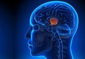 بازگشت مغز معتادان به حالت اولیه با «ورزش»