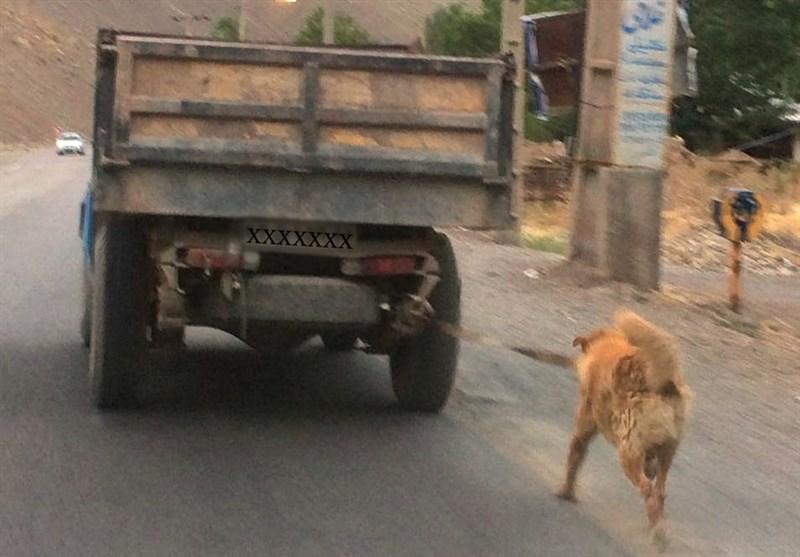 نجات یک سگ از ارابه مرگ در جاده چالوس