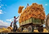 بجنورد ناامیدی کشاورزان خراسانشمالی در پی پرداخت دیرهنگام «مطالبات خرید گندم»