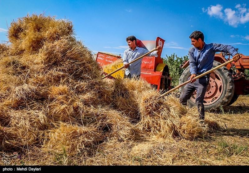 گندمکاران با ارسال نامه به مجلس خواستار پایبندی دولت به قانون شدند + سند