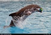 فیلم/ صحنههایی از هوش بالای دلفینها