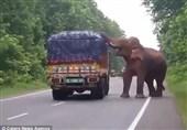 راهزنی به سبک فیل+فیلم و عکس