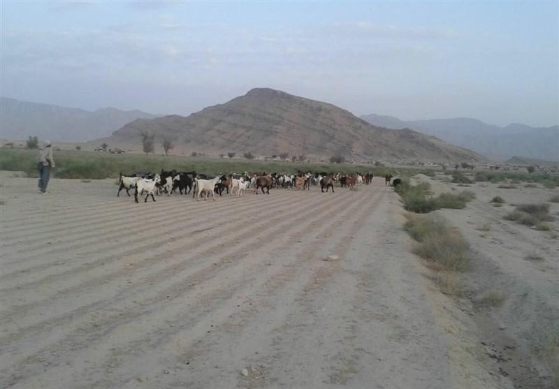 سایه سنگین بیکاری بر سر روستای سایبان لارستان/ کمبود نقدینگی و کم آبی کشاورزی را تعطیل کرد