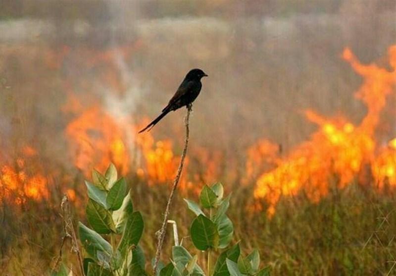 اظهارات مدیرکل حفاظت محیط زیست کردستان درباره آتشسوزی شاهو