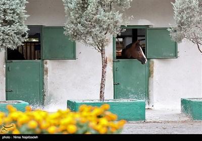 مسابقات پرش با اسب - مشهد