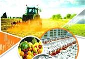 استفاده از ظرفیتهای زرندیه در راستای توسعه کشاورزی مورد توجه قرار گیرد