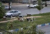 افزایش سگهای ولگرد در شهرکرد؛ شهرداری برای حفظ جان مردم اقدام کند