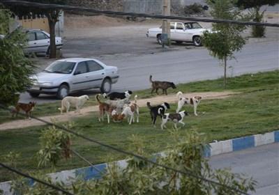 9 مرکز برای نگهداری سگهای ولگرد در استان یزد فعال است