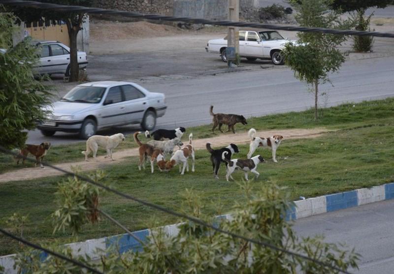 وقتی سگهای ولگرد آرامش را از مردم یاسوج میگیرد+تصاویر