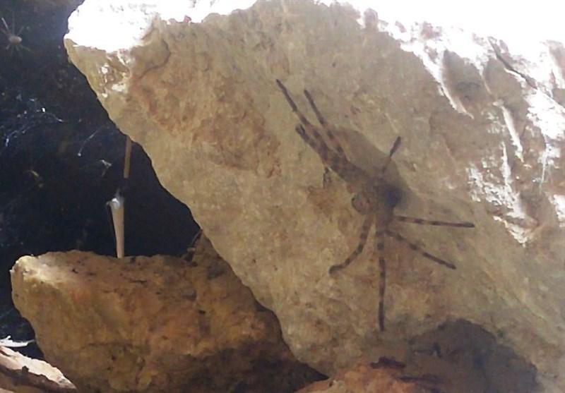 رفع تشنگی با آب آلوده در روستاهای شهرستان دنا/ صدور قبض برای آبی که نمیآید+فیلم