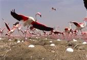 کاشان| نمایشگاه تخصصی عکس حیات وحش در کاشان راه اندازی میشود