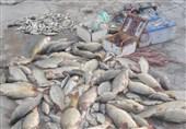 خوزستان| صیادان غیرمجاز ماهی در پارک ملی کرخه شهرستان شوش دستگیر شدند