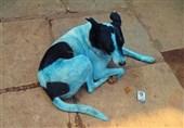 راز آبی شدن سگهای بمبئی+فیلم و عکس