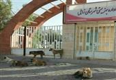 """دانشآموزان سیستانی با ترس مواجهه با """"سگهای هار ولگرد"""" به مدرسه میروند"""