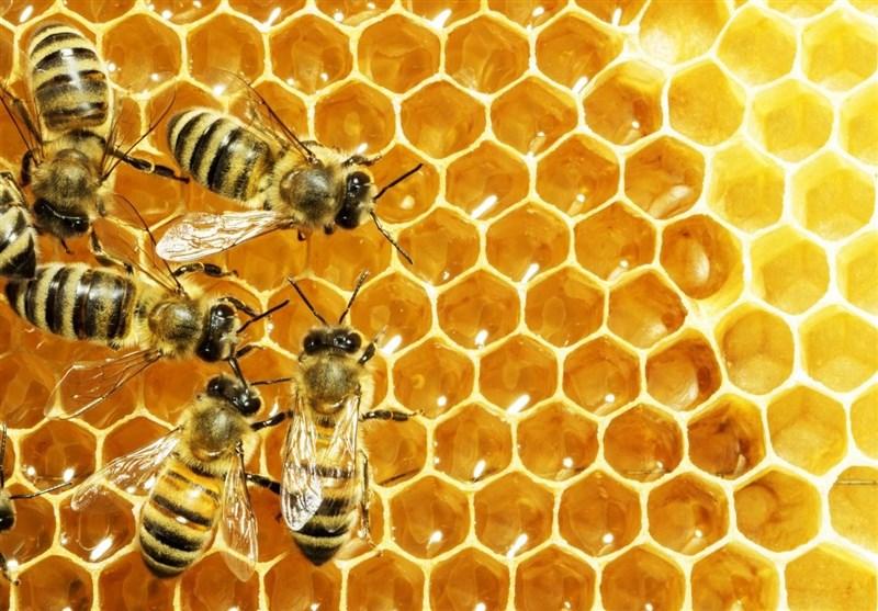 عسل و تولید آن