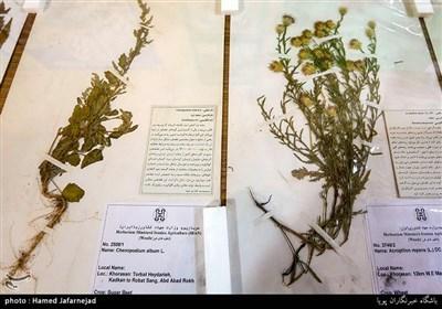 التنوع البیولوجی والموارد الوراثیة للنباتات الطبیة فی إیران