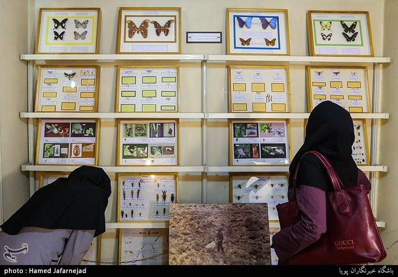 1396053016402161711712894 - «نه» به جمعآوری پروانه / گرانترین پروانههای دنیا کدامند؟