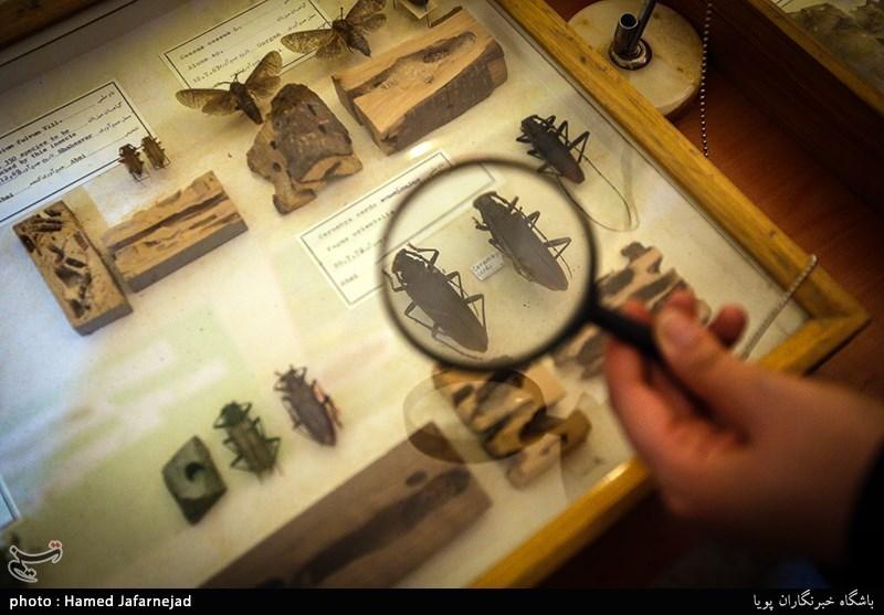 1396053016402338311712894 - «نه» به جمعآوری پروانه / گرانترین پروانههای دنیا کدامند؟