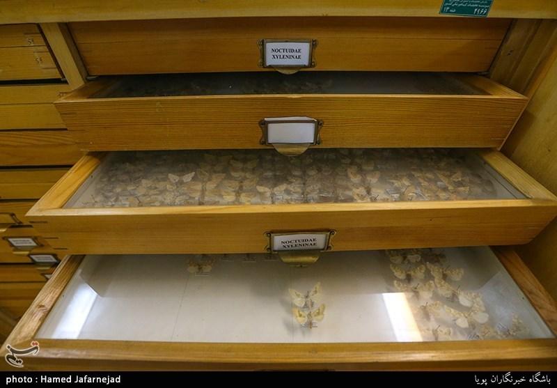 1396053016402446111712894 - «نه» به جمعآوری پروانه / گرانترین پروانههای دنیا کدامند؟