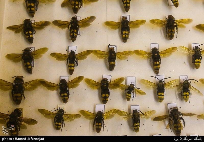 1396053016402513311712894 - «نه» به جمعآوری پروانه / گرانترین پروانههای دنیا کدامند؟