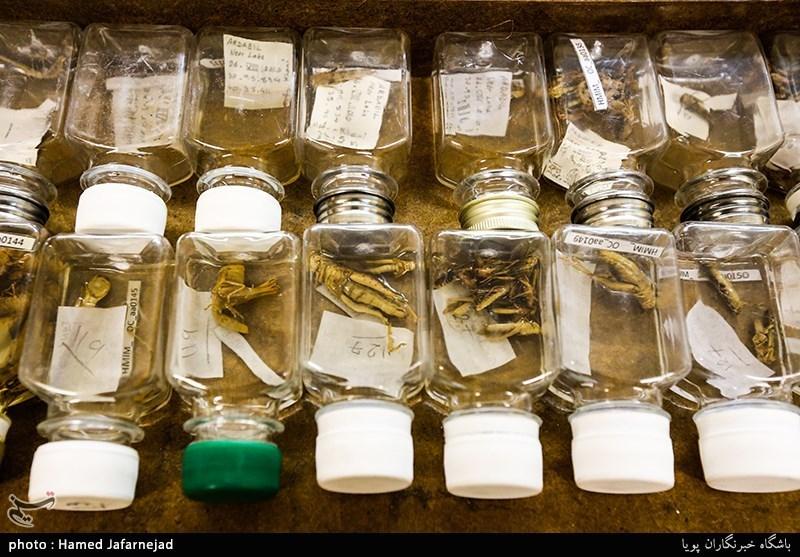 1396053016402558611712894 - «نه» به جمعآوری پروانه / گرانترین پروانههای دنیا کدامند؟