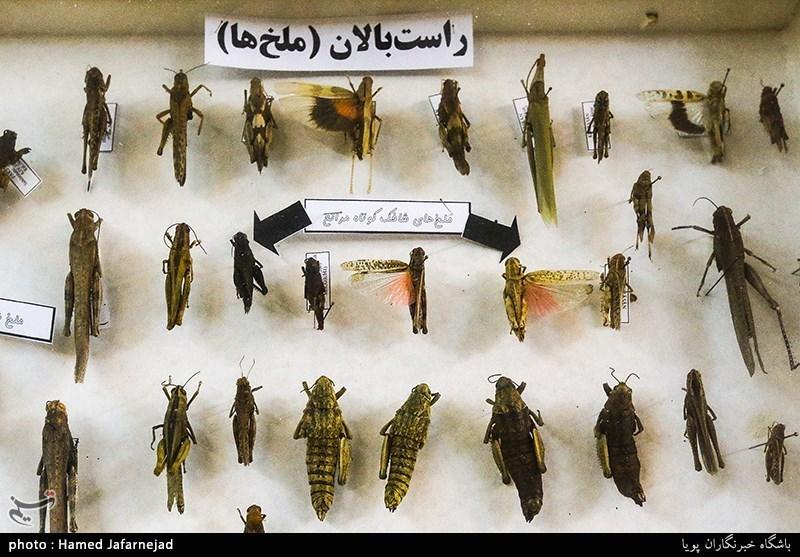1396053016402627311712894 - «نه» به جمعآوری پروانه / گرانترین پروانههای دنیا کدامند؟
