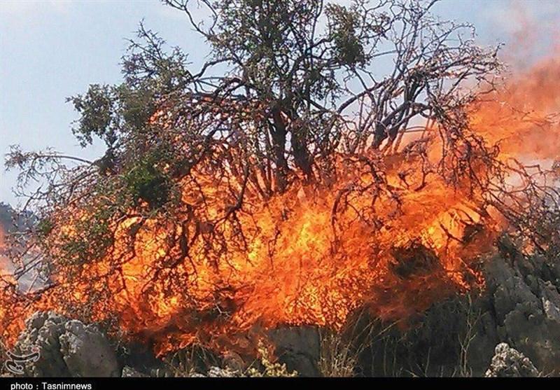 لرستان|آتش نیستی در بلوطستان؛ جنگلهای زاگرس ایستاده میسوزند