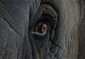 اخراج مهاجران غیرقانونی و تخریب خانههایشان با فیل+تصاویر